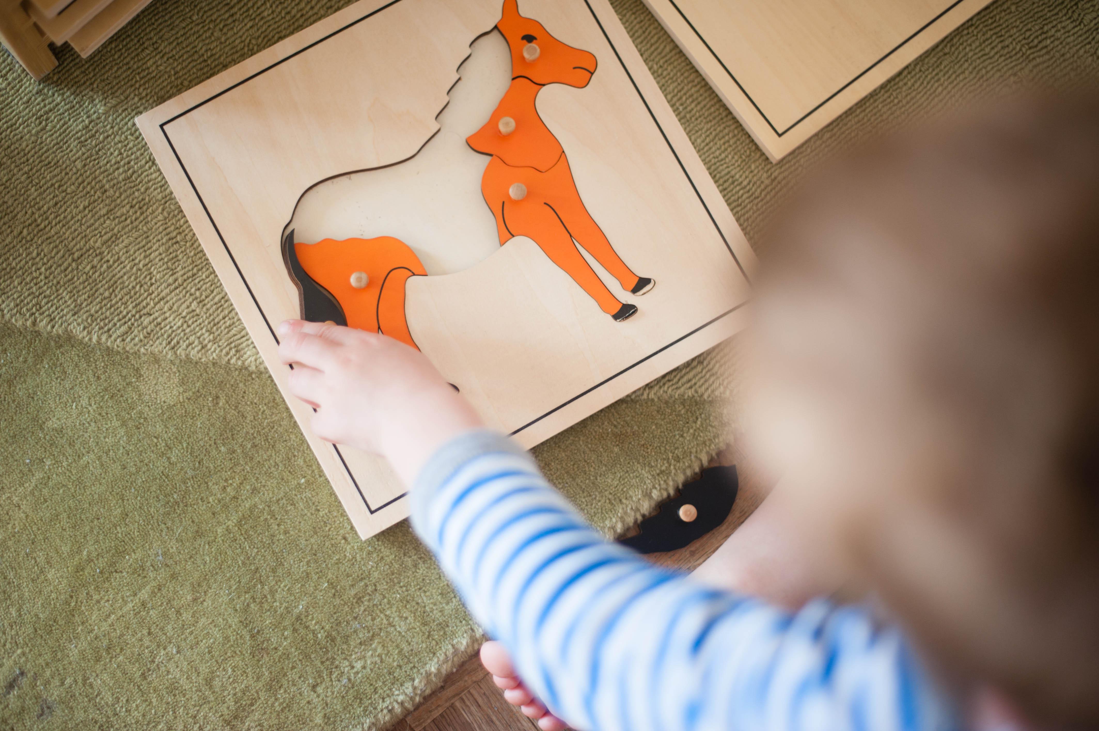 cabinet de zoologie montessori
