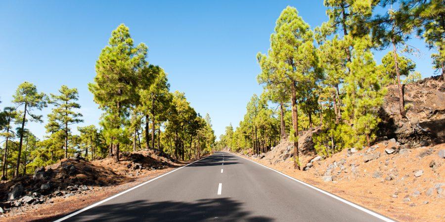 Corona Forestal - Ténérife